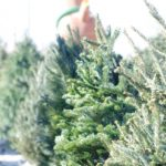 クリスマスツリーに本物のモミの木は購入可能?通販やレンタルは?