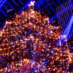 サッポロファクトリーのツリー点灯式やイルミネーション期間 見どころは?